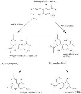 how cbd works